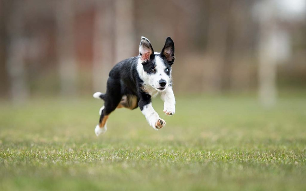 Reinforce the heck out of all desired behaviours your puppy offers while it is still easy to do, i.e. before your puppy turns six months.
