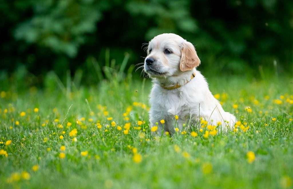 When you get your puppy to understand what you want it to do, you will see the best results. Capture any behaviours you want to reinforce as the puppy goes about doing things.